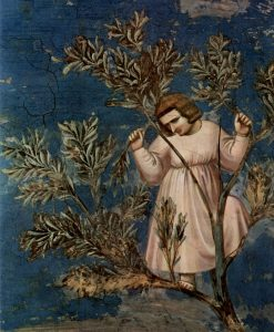 Ingresso a Gerusalemme di Giotto